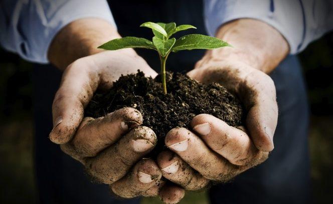Bando Misura 4 – Sottomisura 4.1 – Investimenti nelle aziende agricole – Regione Basilicata