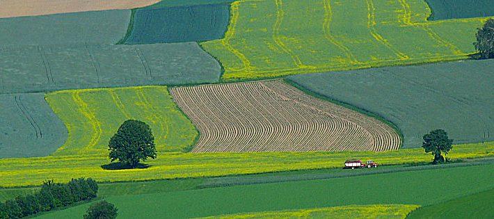 Banca Nazionale delle Terre Agricole: Ismea offre 8.000 ettari!
