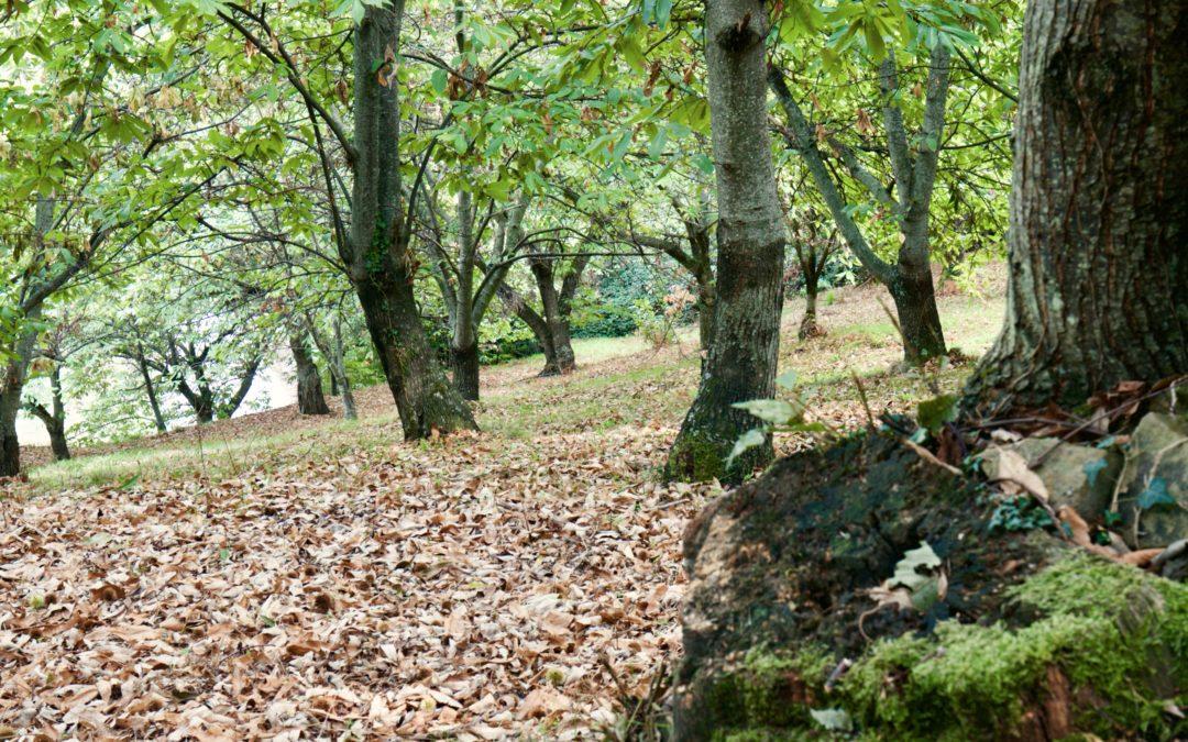 Bando Misura 8.1.1 – Regione Basilicata – Sostegno alla forestazione e all'imboschimento